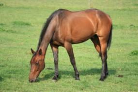 Artukuły do pielęgnacji koni